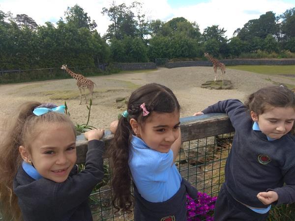 Senior Infant School Tour to Dublin Zoo.