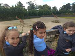 Senior Infant School Tour to Dublin Zoo.