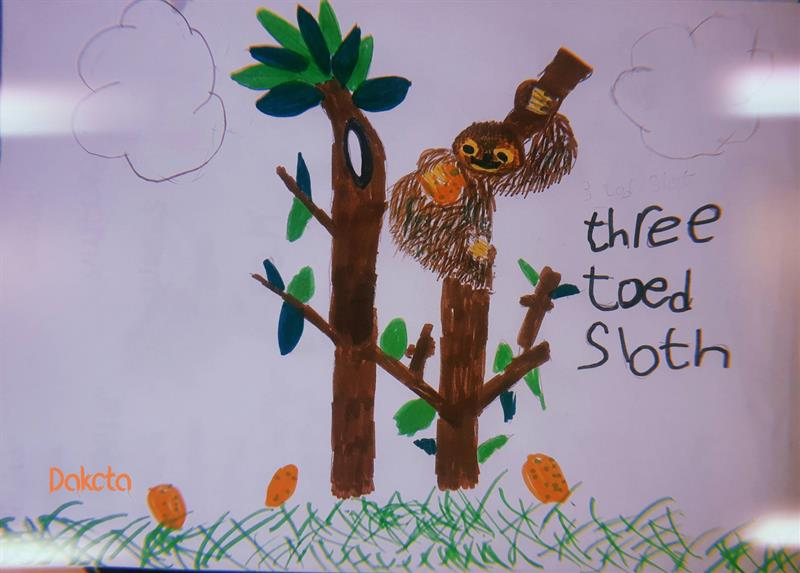 Dakota Sloth (1).jpg