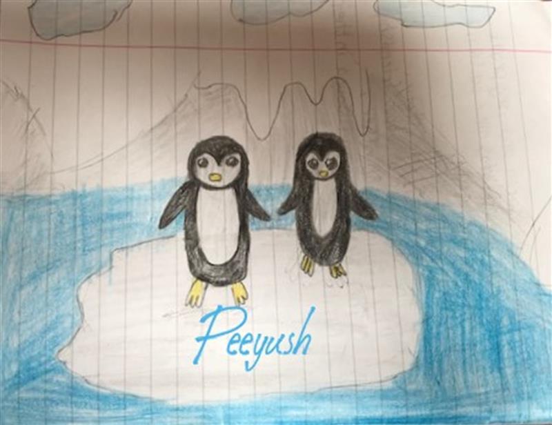 Peeyush penguins.jpg