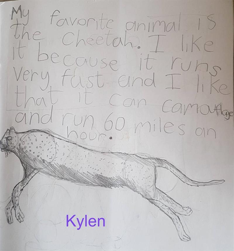 Cheetah Kylen (1).jpg
