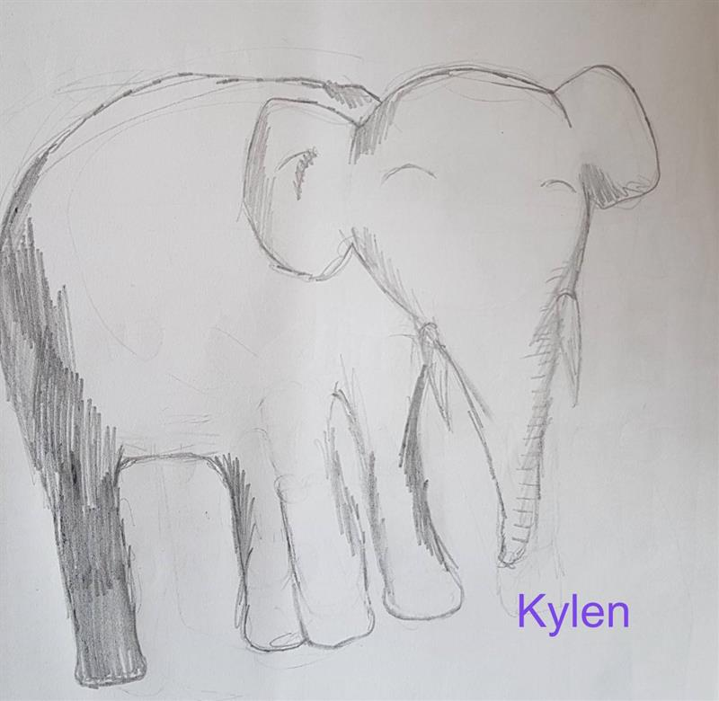 Elephant Sketch Kylen (1).jpg