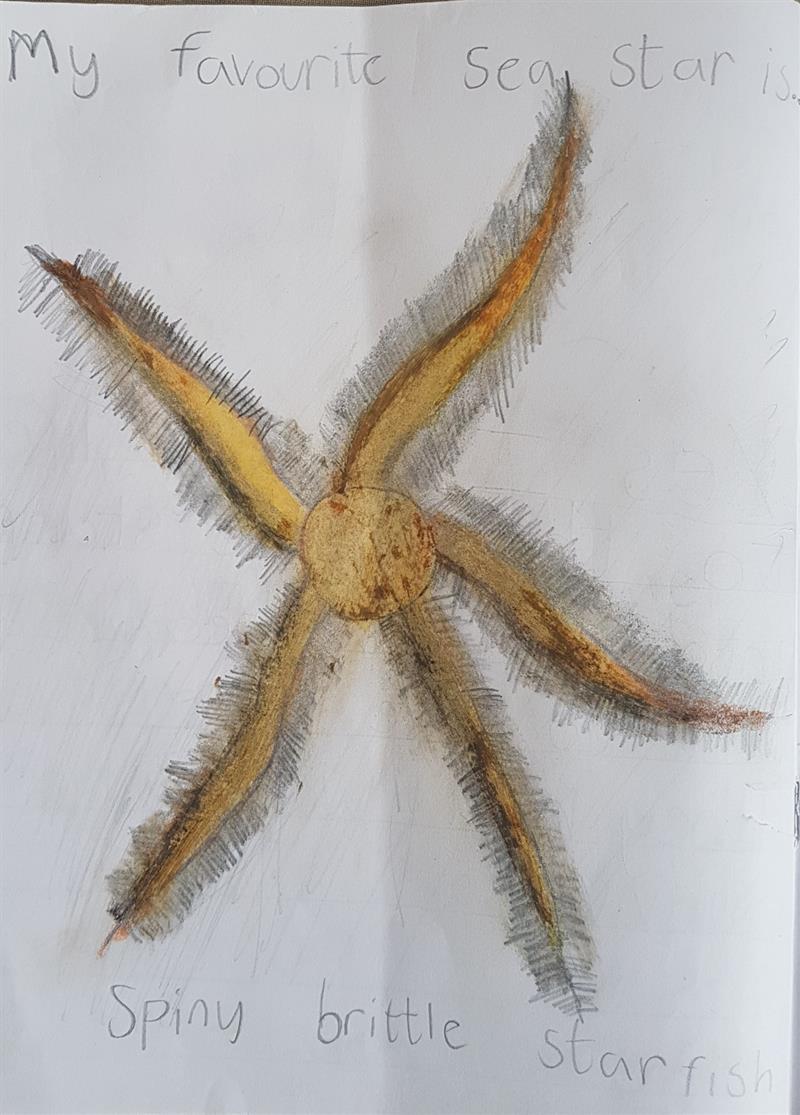 Spiny brittle Star Fish Kylen (1).jpg