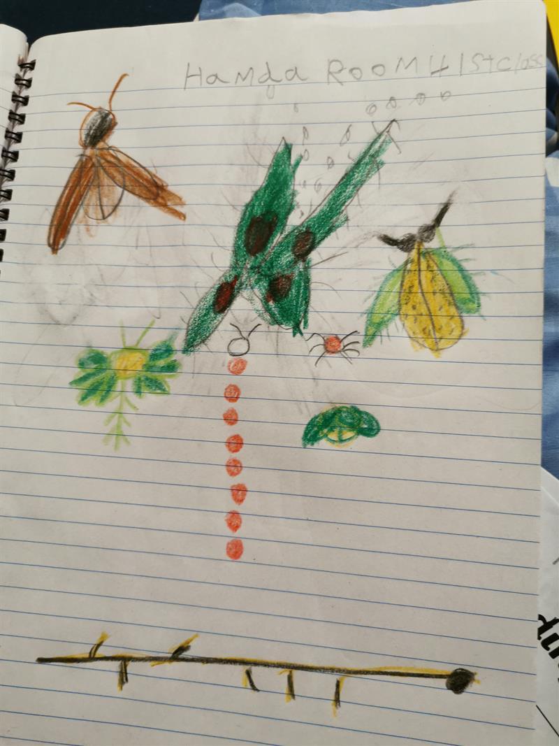 Hamda leaf art.jpg