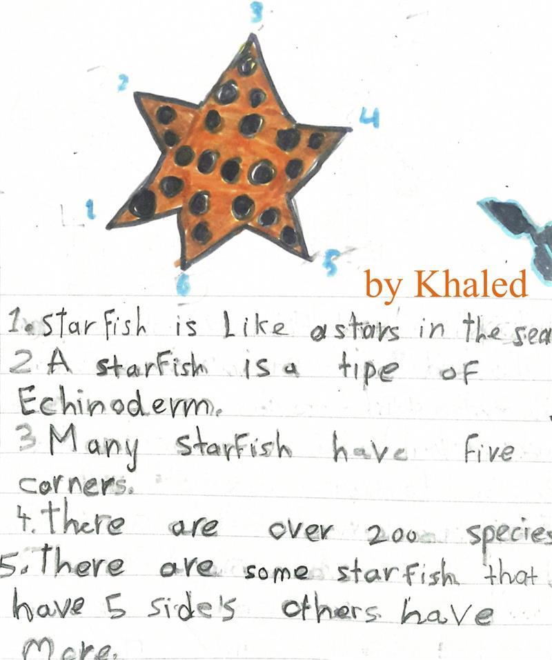 khaled starfish.jpg