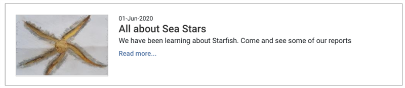 All About Sea Stars.png