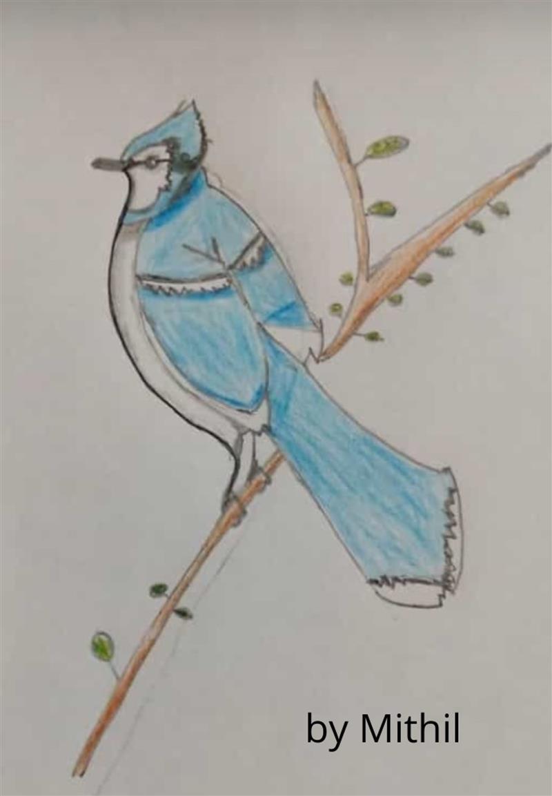 mithil bird (2) (1).jpg